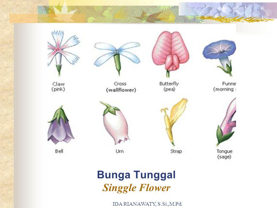 Bunga Tunggal Singgle Flower