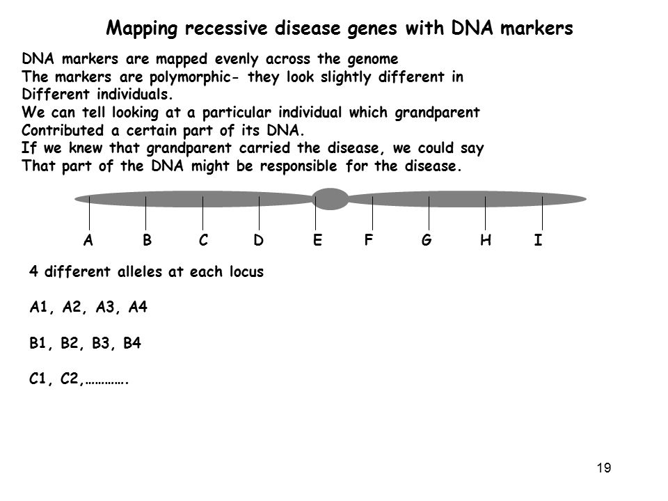 Mapping recessive disease genes with DNA markers
