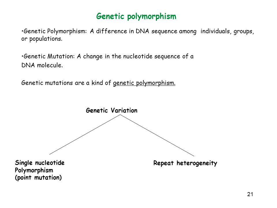 Genetic polymorphism Genetic Polymorphism: A difference in DNA sequence among individuals, groups, or populations.