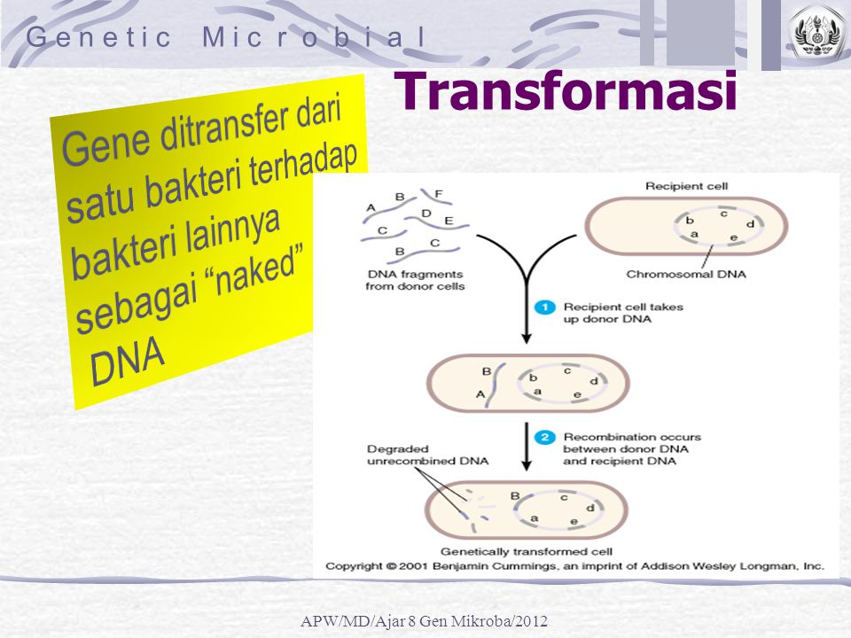 APW/MD/Ajar 8 Gen Mikroba/2012