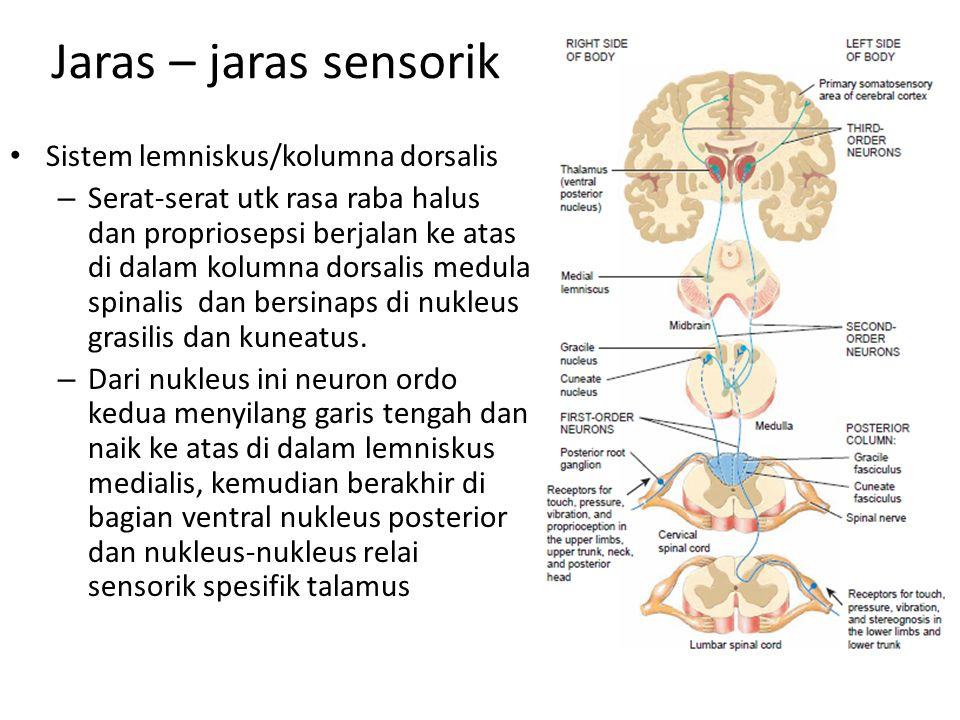 Jaras – jaras sensorik Sistem lemniskus/kolumna dorsalis