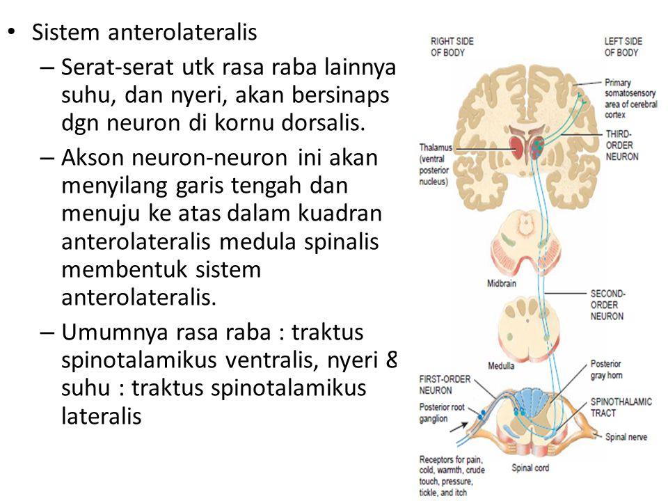 Sistem anterolateralis