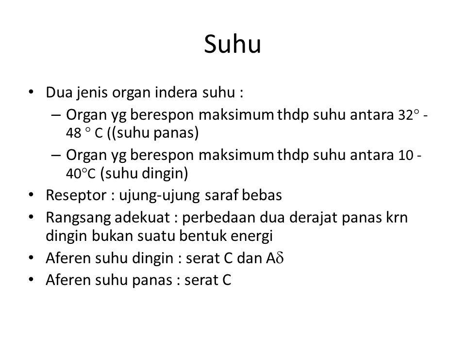 Suhu Dua jenis organ indera suhu :