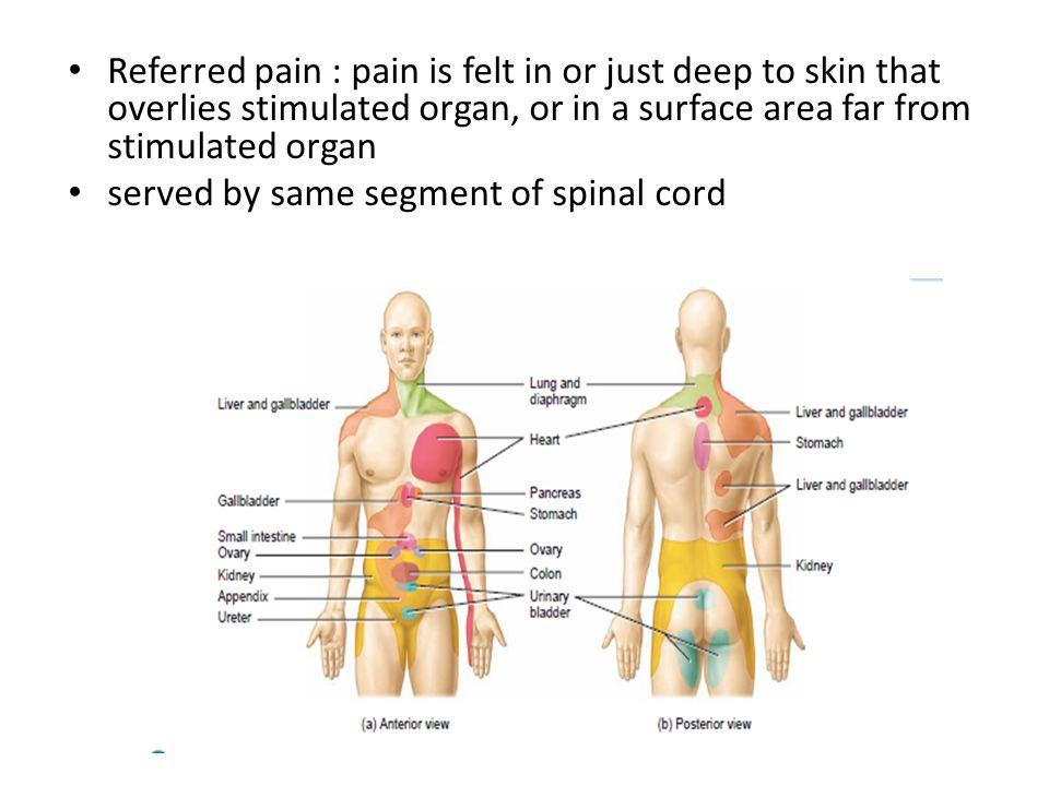 Referred pain : pain is felt in or just deep to skin that overlies stimulated organ, or in a surface area far from stimulated organ