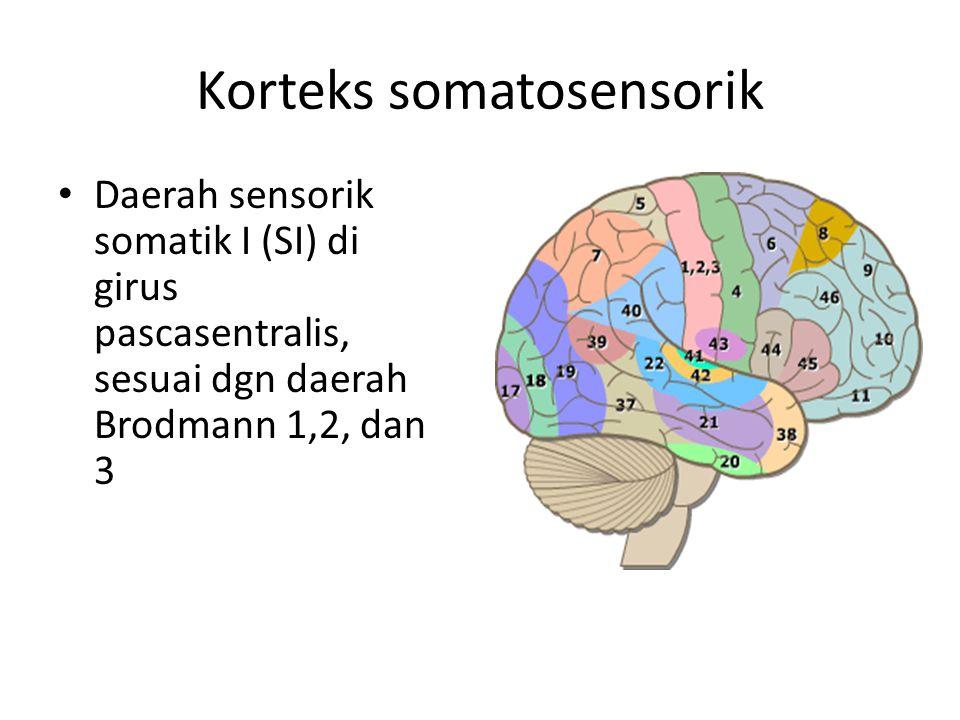 Korteks somatosensorik