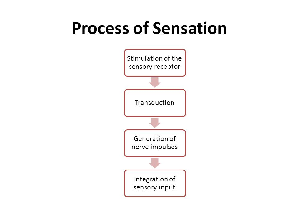 Process of Sensation Stimulation of the sensory receptor Transduction