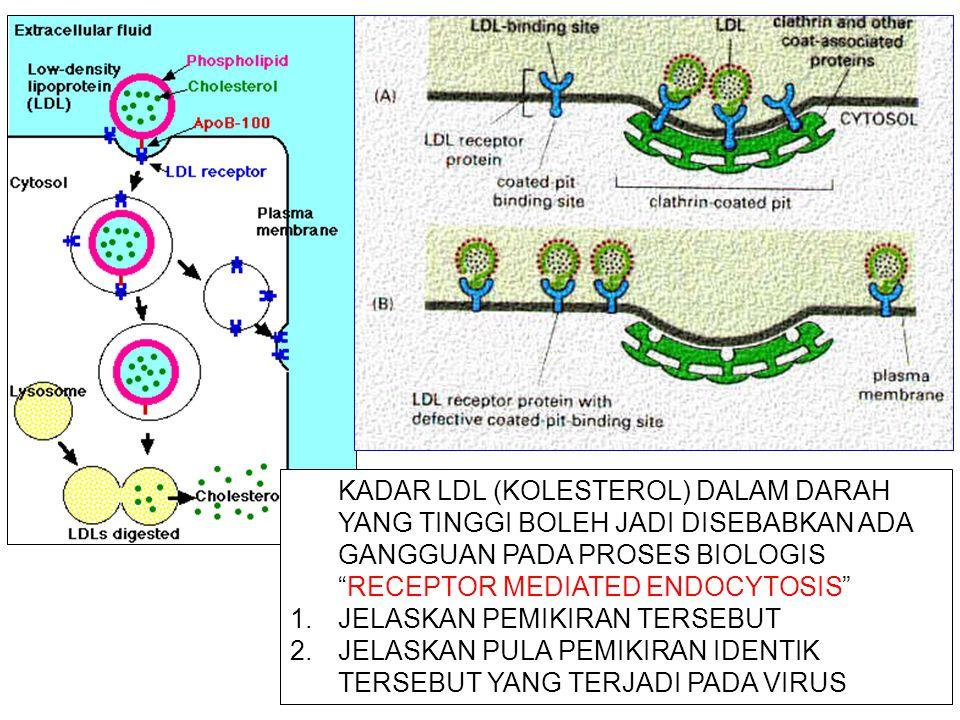 KADAR LDL (KOLESTEROL) DALAM DARAH YANG TINGGI BOLEH JADI DISEBABKAN ADA GANGGUAN PADA PROSES BIOLOGIS RECEPTOR MEDIATED ENDOCYTOSIS