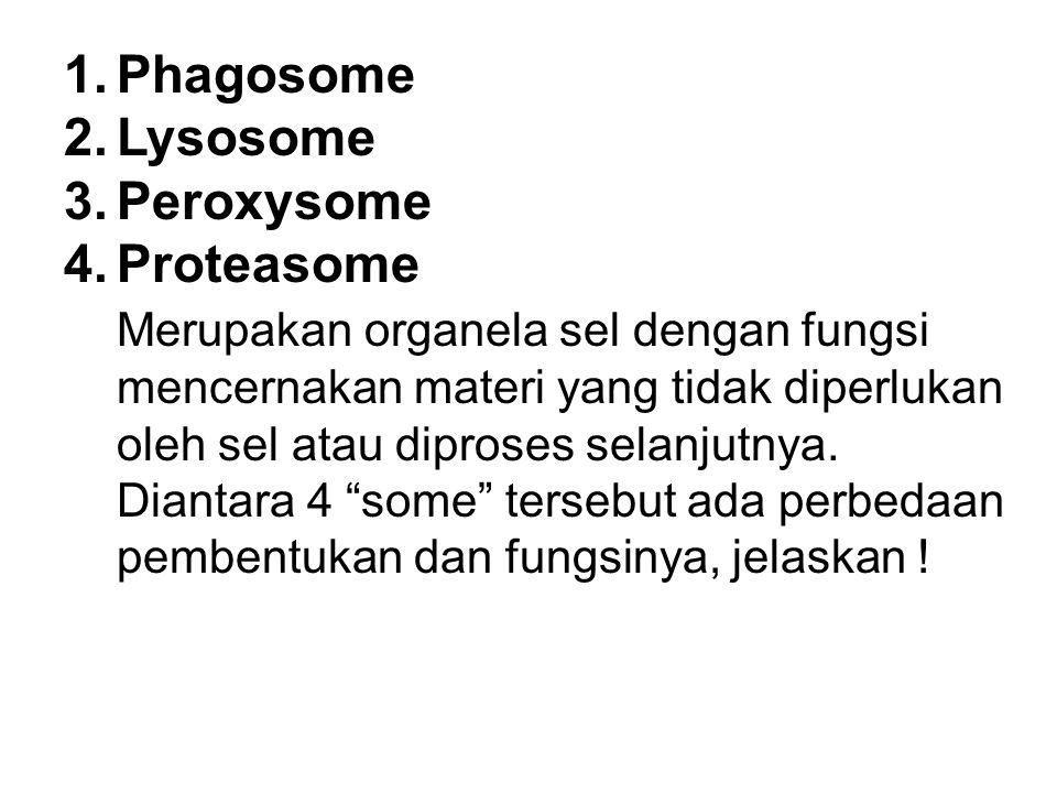 Phagosome Lysosome Peroxysome Proteasome