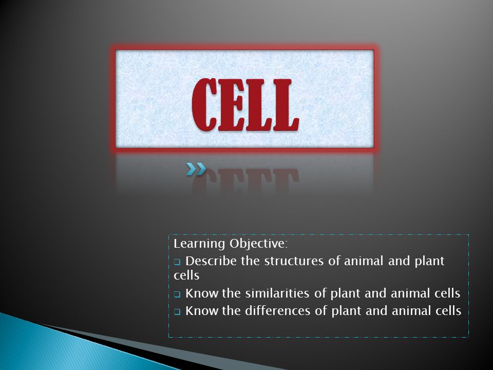 CELL Learning Objective: