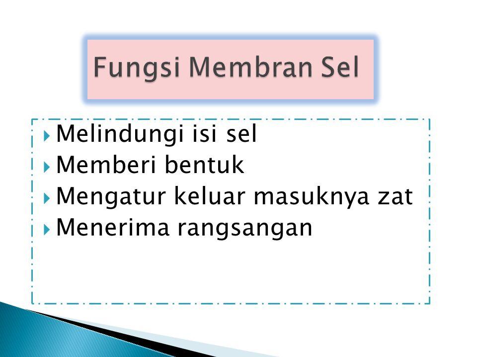 Fungsi Membran Sel Melindungi isi sel Memberi bentuk