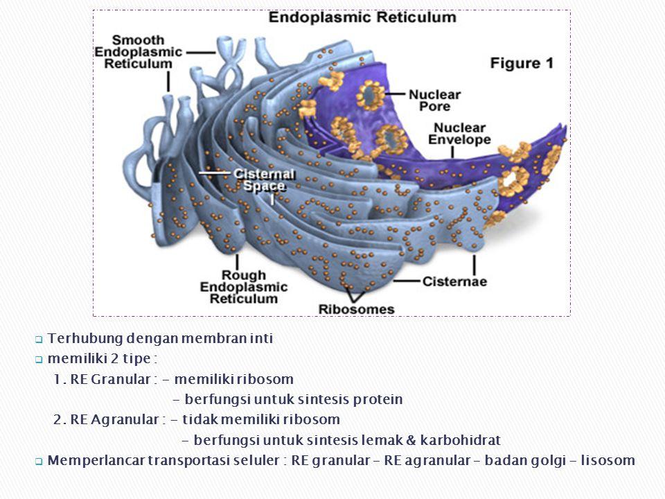 Terhubung dengan membran inti
