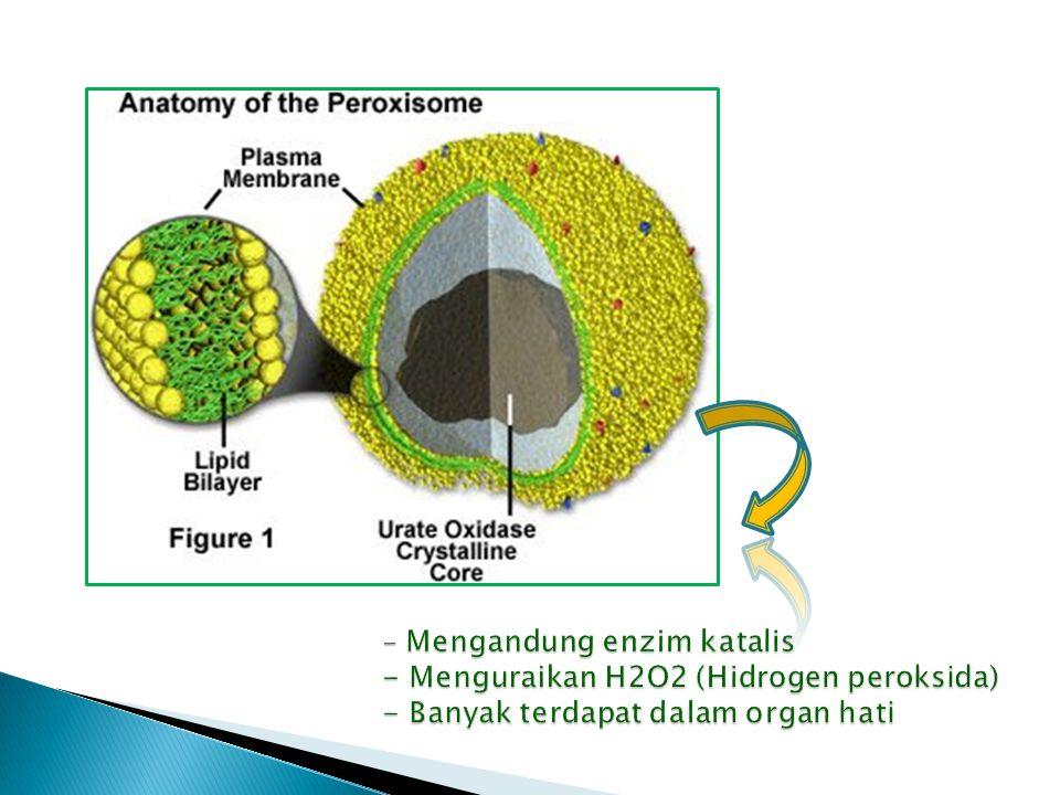 - Mengandung enzim katalis - Menguraikan H2O2 (Hidrogen peroksida) - Banyak terdapat dalam organ hati