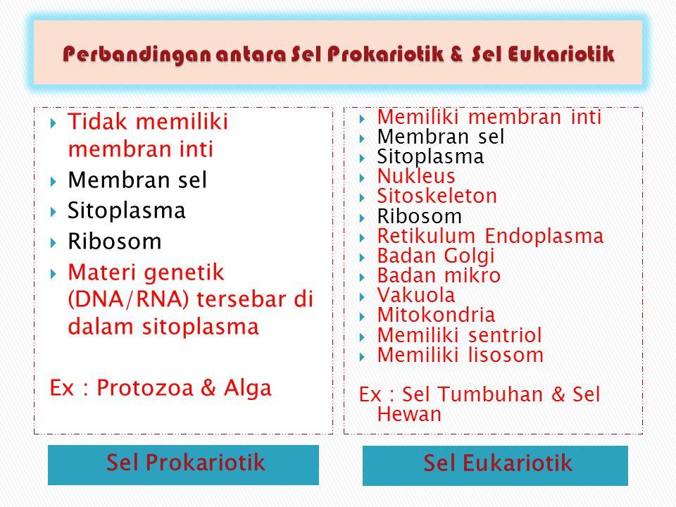 Perbandingan antara Sel Prokariotik & Sel Eukariotik