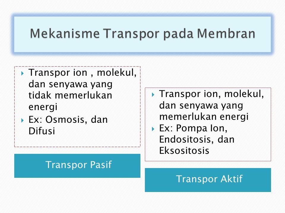 Mekanisme Transpor pada Membran