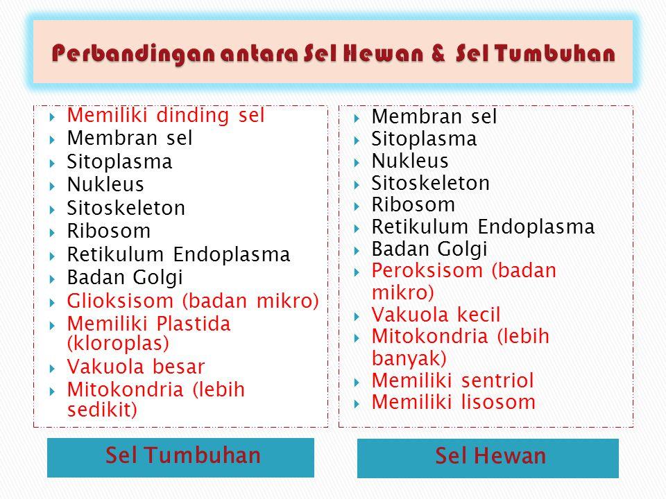 Perbandingan antara Sel Hewan & Sel Tumbuhan