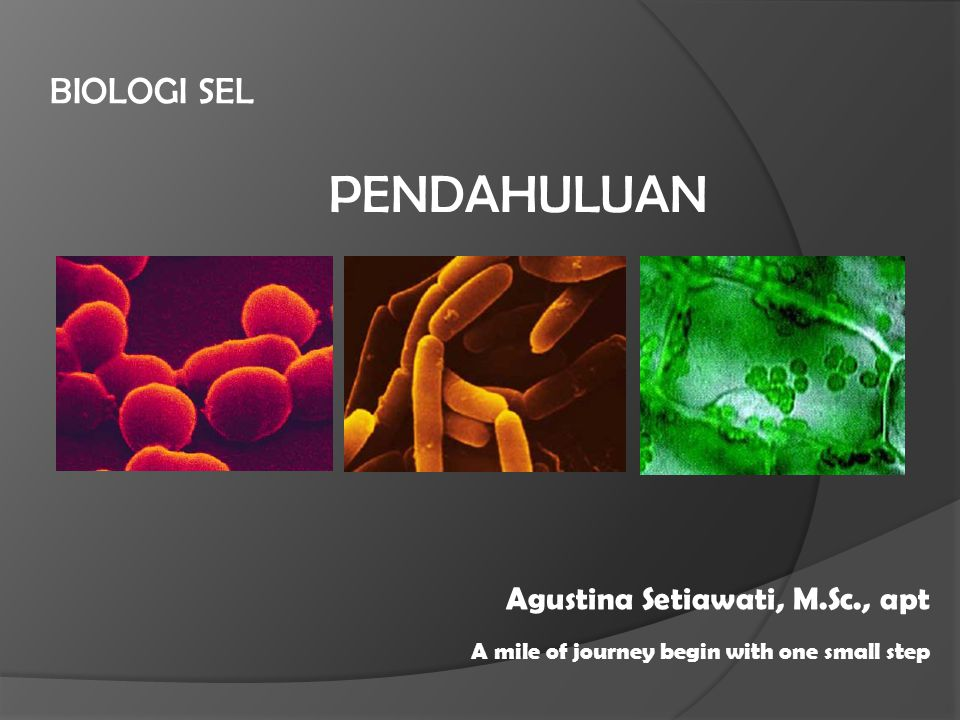 PENDAHULUAN BIOLOGI SEL Agustina Setiawati, M.Sc., apt