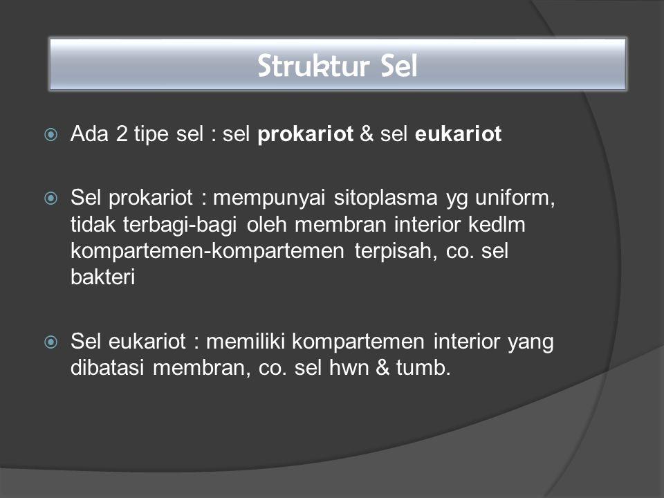 Struktur Sel Ada 2 tipe sel : sel prokariot & sel eukariot