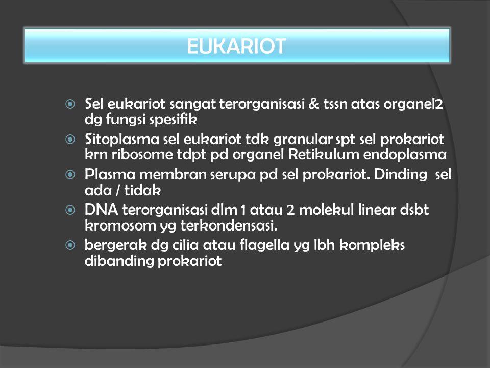 EUKARIOT Sel eukariot sangat terorganisasi & tssn atas organel2 dg fungsi spesifik.