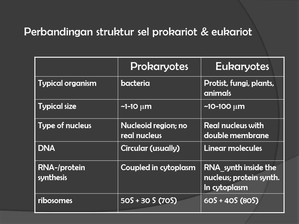 Perbandingan struktur sel prokariot & eukariot
