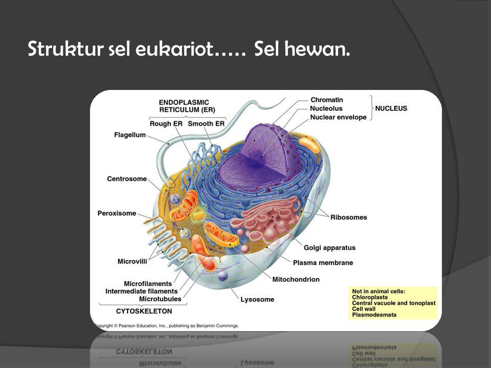 Struktur sel eukariot….. Sel hewan.