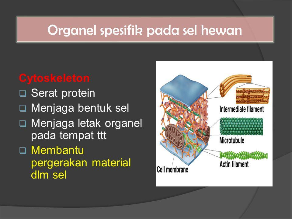 Organel spesifik pada sel hewan