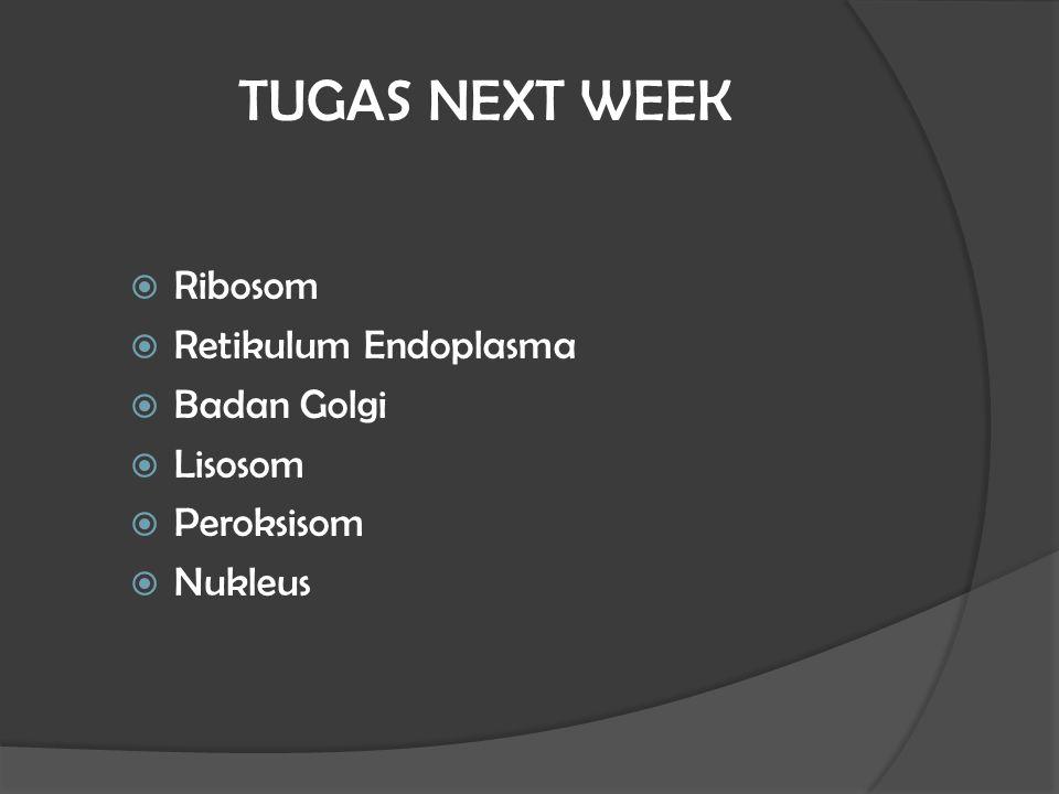 TUGAS NEXT WEEK Ribosom Retikulum Endoplasma Badan Golgi Lisosom