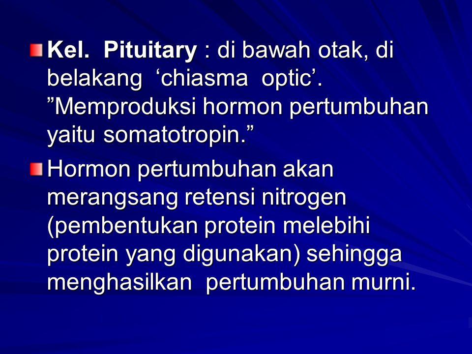 Kel. Pituitary : di bawah otak, di belakang 'chiasma optic'