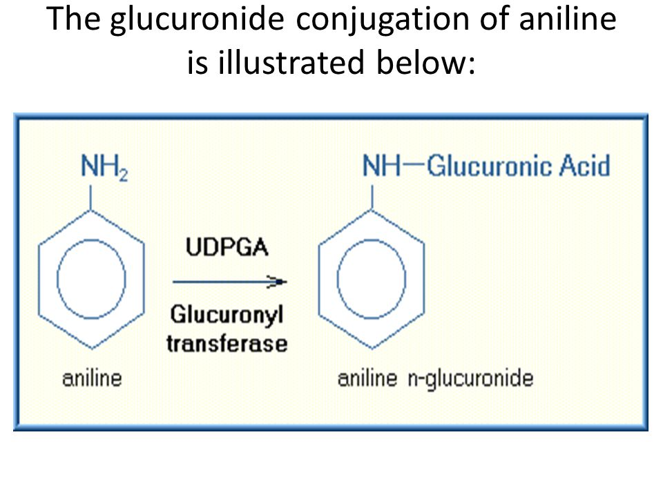 The glucuronide conjugation of aniline is illustrated below: