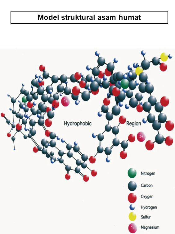 Model struktural asam humat
