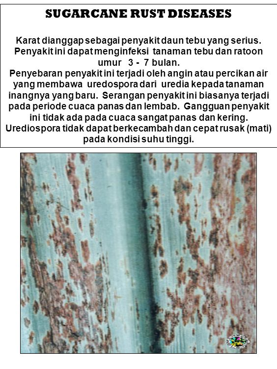 SUGARCANE RUST DISEASES