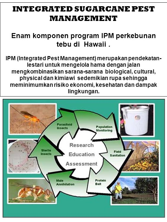 INTEGRATED SUGARCANE PEST MANAGEMENT