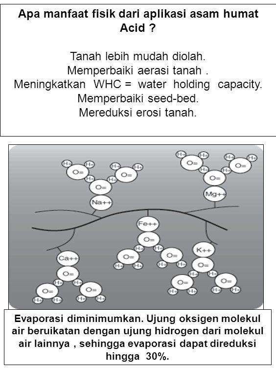 Apa manfaat fisik dari aplikasi asam humat Acid