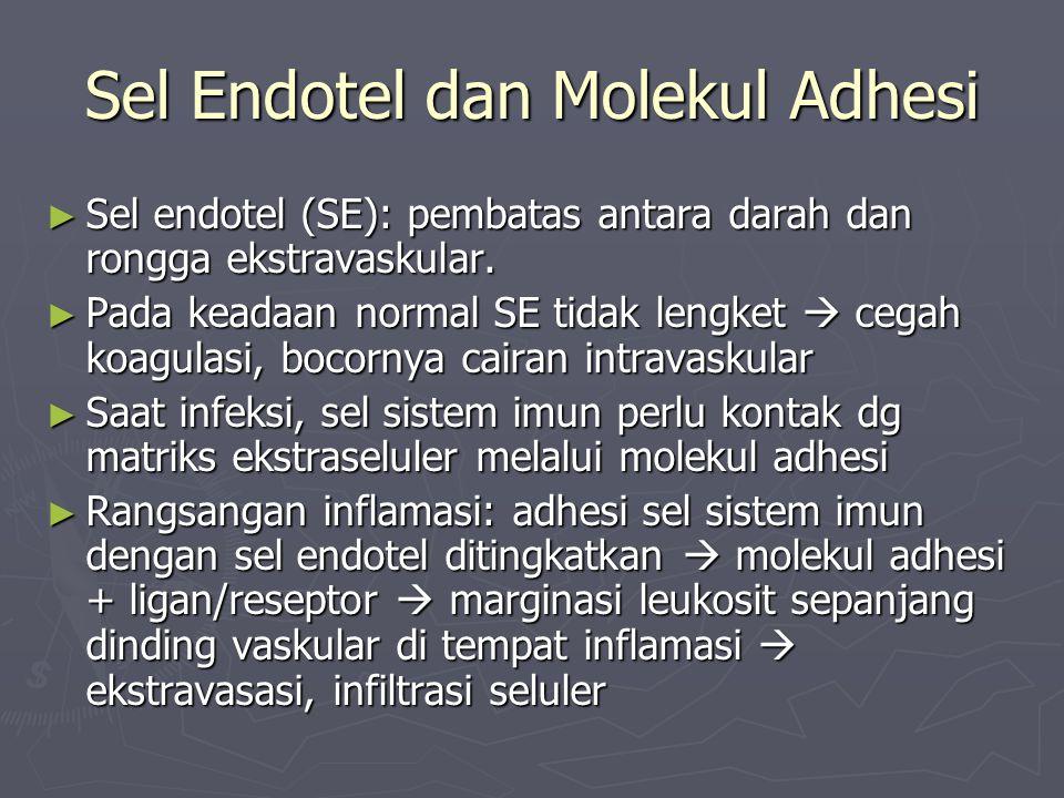 Sel Endotel dan Molekul Adhesi