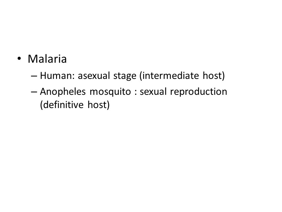 Malaria Human: asexual stage (intermediate host)