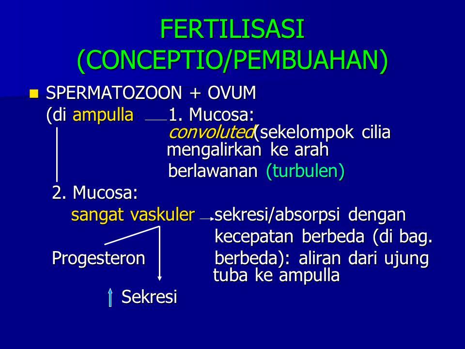 FERTILISASI (CONCEPTIO/PEMBUAHAN)