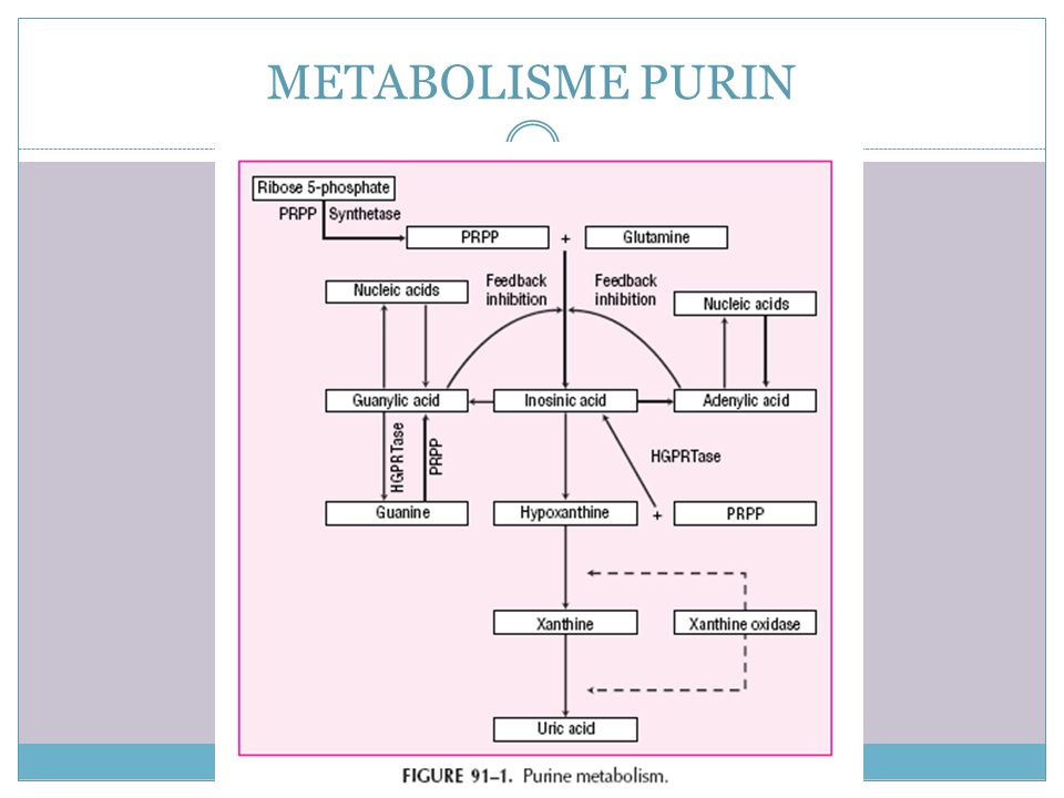 METABOLISME PURIN