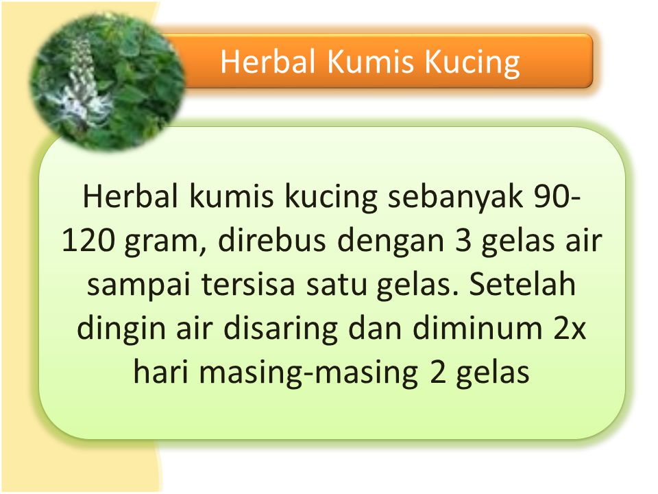 Herbal Kumis Kucing