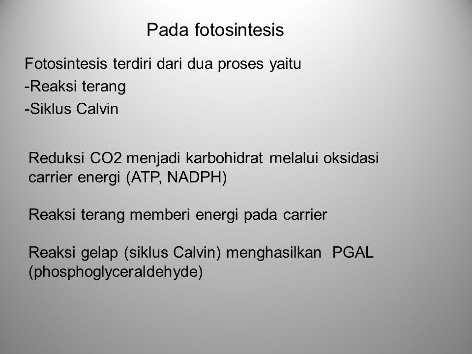 Pada fotosintesis Fotosintesis terdiri dari dua proses yaitu