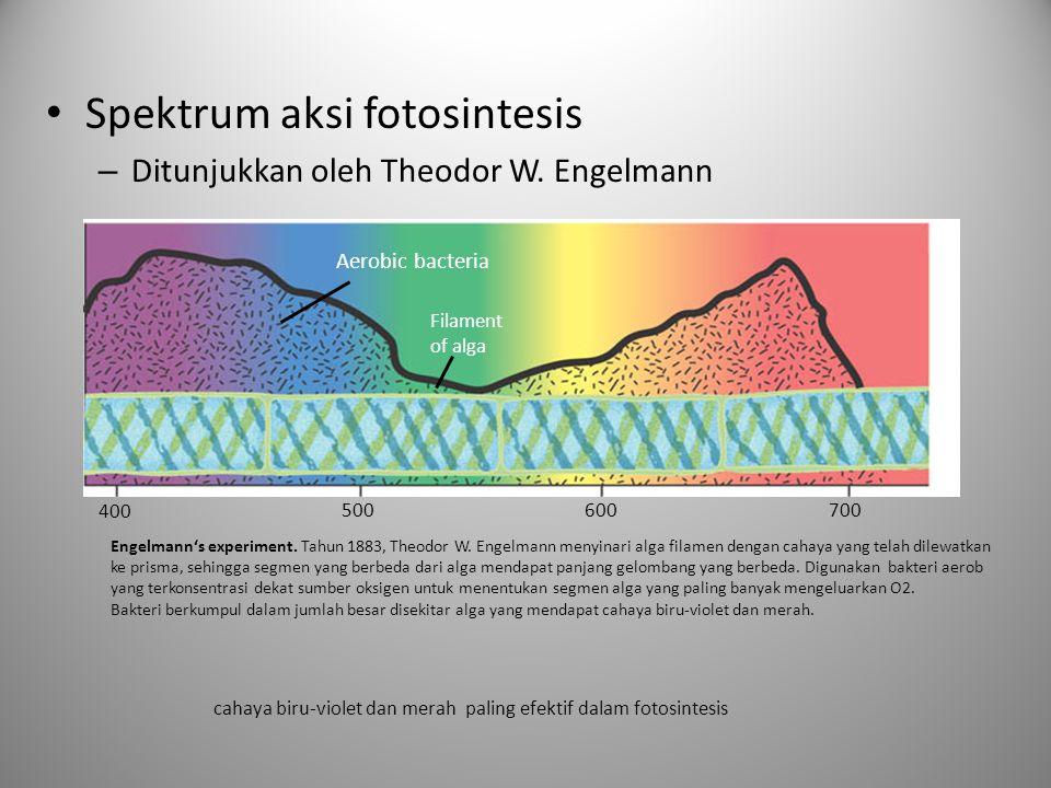 Spektrum aksi fotosintesis