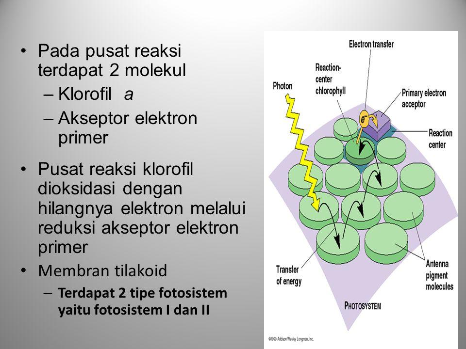 Pada pusat reaksi terdapat 2 molekul Klorofil a