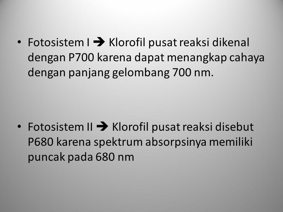 Fotosistem I  Klorofil pusat reaksi dikenal dengan P700 karena dapat menangkap cahaya dengan panjang gelombang 700 nm.