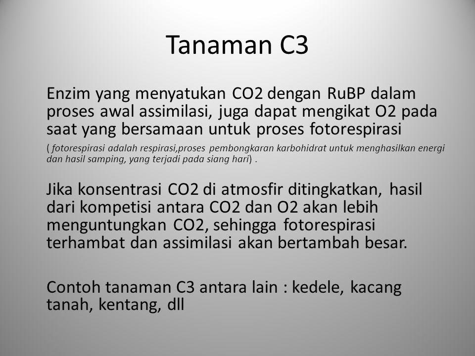 Tanaman C3