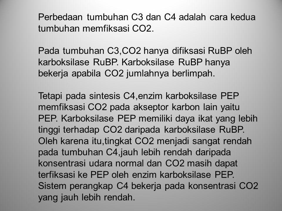 Perbedaan tumbuhan C3 dan C4 adalah cara kedua tumbuhan memfiksasi CO2.