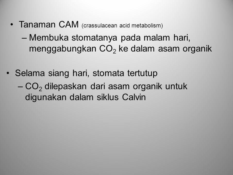 Tanaman CAM (crassulacean acid metabolism)