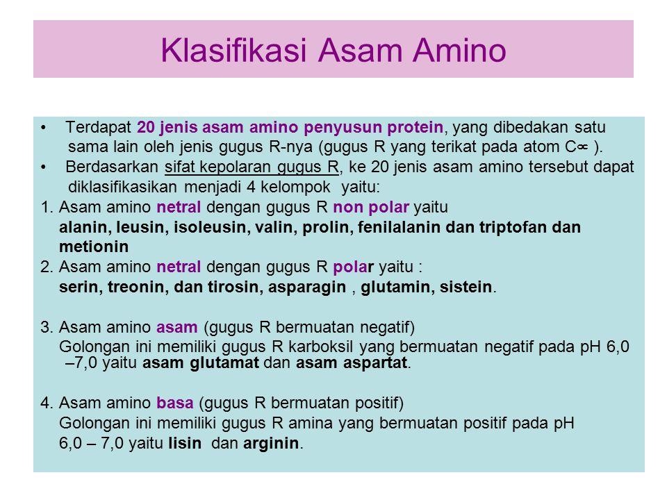 Klasifikasi Asam Amino