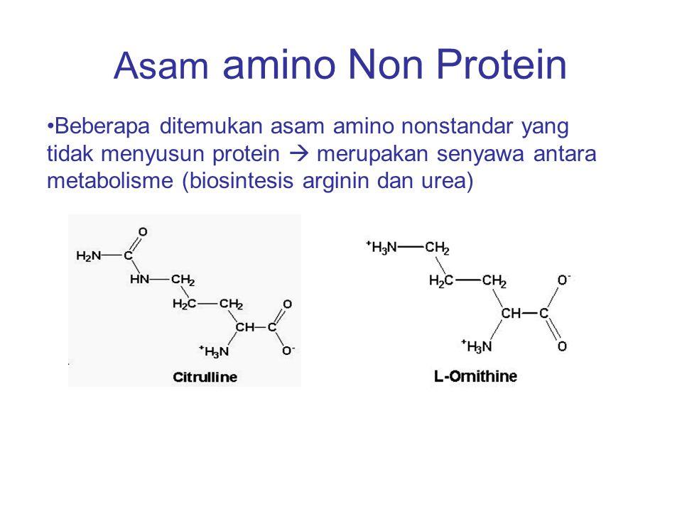 Asam amino Non Protein