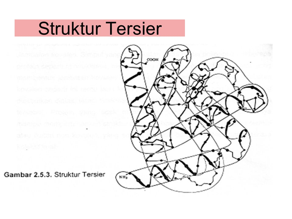 Struktur Tersier