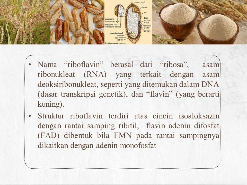 Nama riboflavin berasal dari ribosa , asam ribonukleat (RNA) yang terkait dengan asam deoksiribonukleat, seperti yang ditemukan dalam DNA (dasar transkripsi genetik), dan flavin (yang berarti kuning).