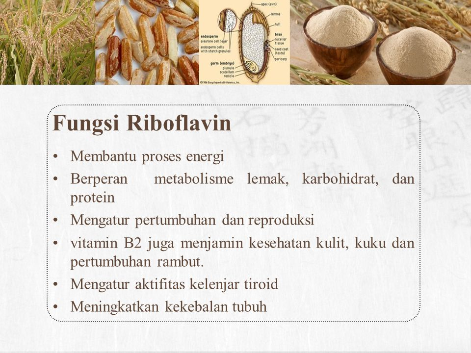Fungsi Riboflavin Membantu proses energi