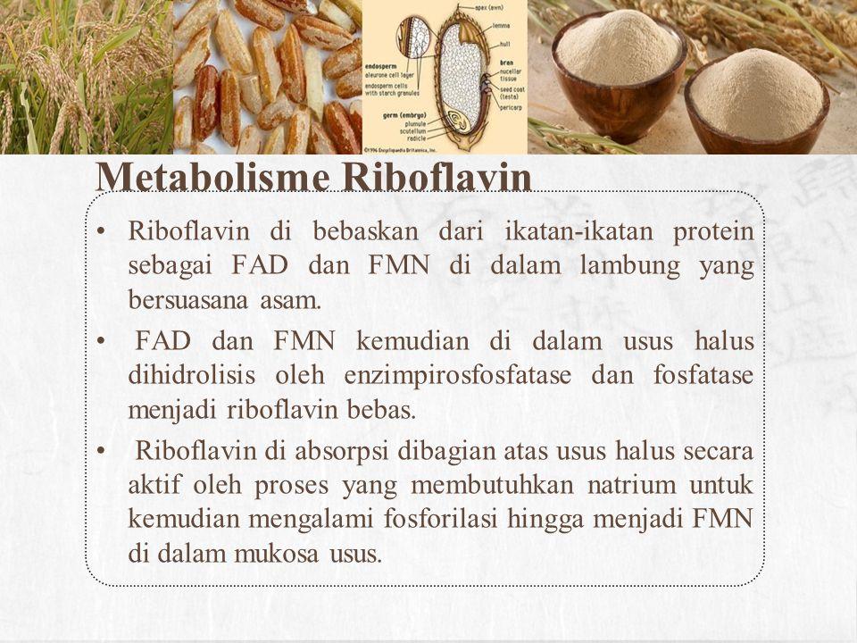 Metabolisme Riboflavin
